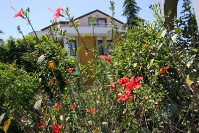 Розовый Кемер кемер турция китайская роза гибискус май 2013