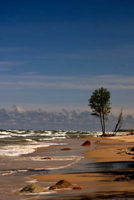 в море море побережье сосна