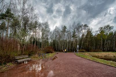 Около пруда Лось... Москва лесопарк Лосиный остров