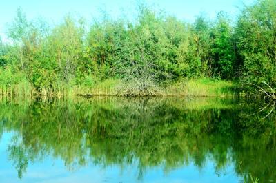 У озера природа озеро лето деревья