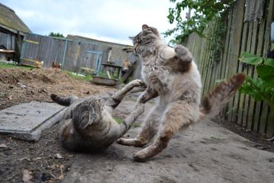 Bad cat cat коты кот