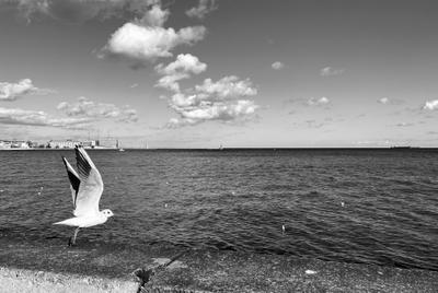 .freedom. gdansk