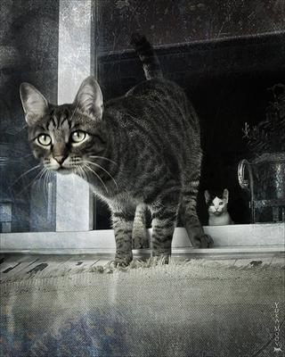 ***Кот и .. Кот