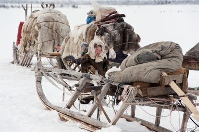 Где воет вьюга ямал вьюга север девочка олень тундра