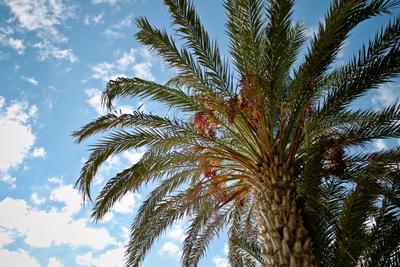Пафосная пальма пальма, небо, солнце