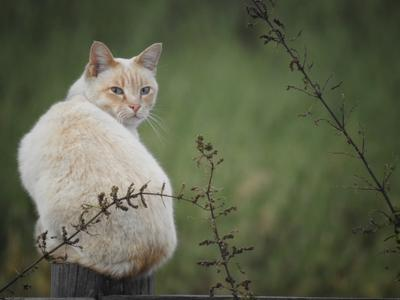 деревенский кот кот деревня охотник