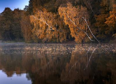 Склонились у воды березы природа пейзаж осень вода березы