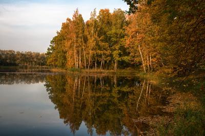 Осень - рыжая подруга Петергоф Английский парк золотая осень