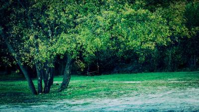 *** дерево качели парк пейзаж природа