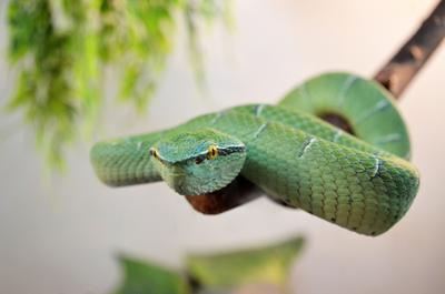 Вижу тебя змея