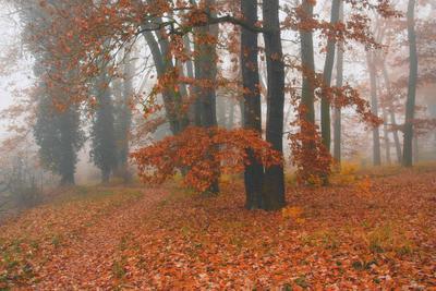 осень в парке осень листья деревья краски