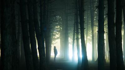 Один Лес один мистика