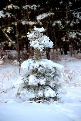 Малышка в шубке Сибирь зима иней серебро снег деревья