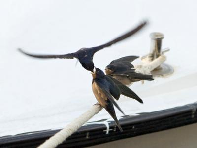 Спиногрызы птицы