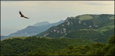 Крымский небожитель Крым май гриф Белоголовый сип вид на Алушту