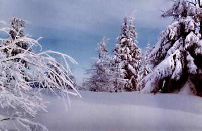 Белая вьюга-зима снегом запорошила
