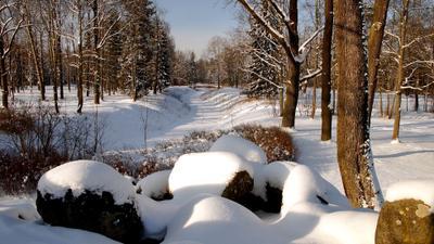 Солнечный день Александровский парк зима пруд лес