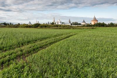 Полюшко монастырь поле трава Вологда Прилуки