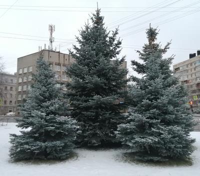 С Новым Годом 2021 Санкт-Петербург снег зима 2021 ёлки елка январь