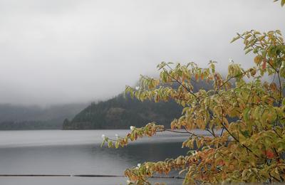 Сплошной дождь туман озеро осень