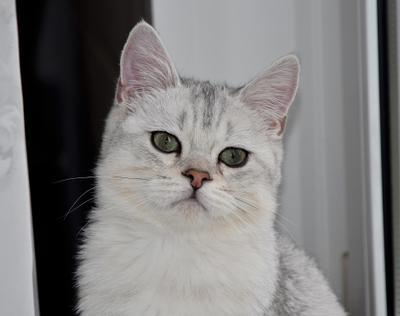 Степашка №6 коты
