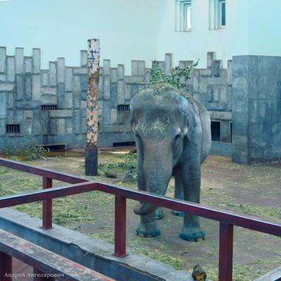 Слониха Даша Екатеринбург зоопарк слон животные