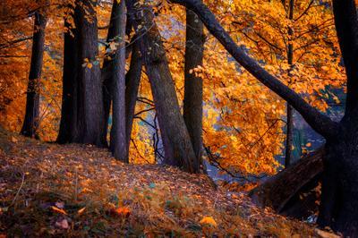 В осеннем наряде Осень закат деревья небо православие россия природа пейзаж