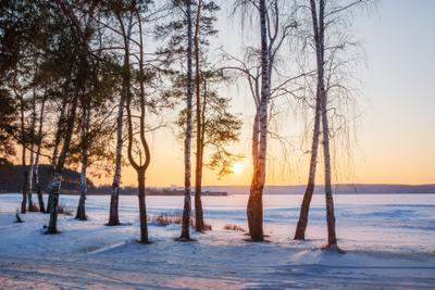 Морозный закат пейзаж природа зима вечер Воронеж лес сосна берёза водохранилище солнце мороз