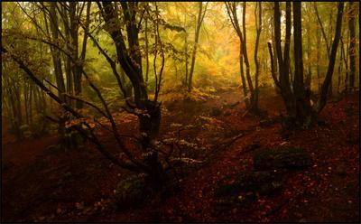 Волшебный лес Демирджи Крым Осень