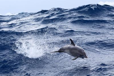 Дельфин дельфин океан атлантика волны