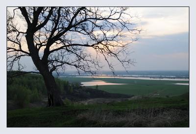 Дуб Пейзаж, весна, дуб, дерево, закат