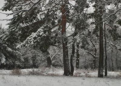 Зимняя Лес зима белка