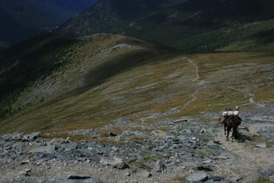 Алтай кочевой алтай кочевник лошадь горы