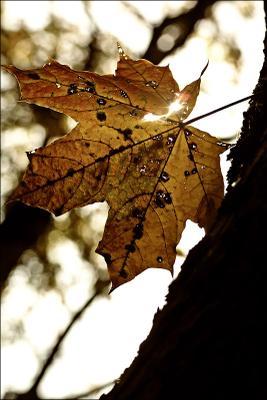 Последний лист Последний, лист, дерево, осень, свет