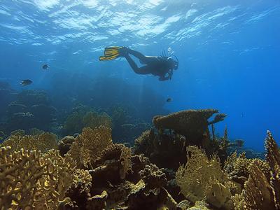 Золотые кораллы