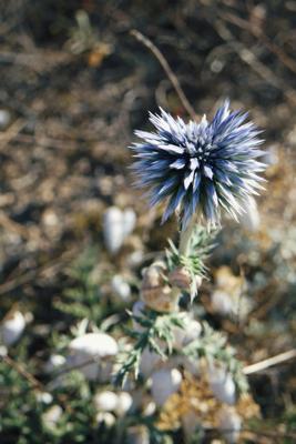 иссохший цветок макро улитка раковина