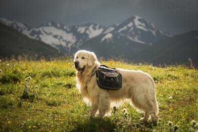 Верный помощник в путешествиях собака рюкзак горы