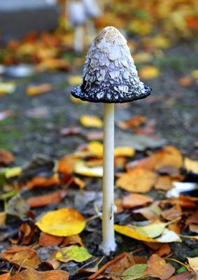 Гламурный природа гриб