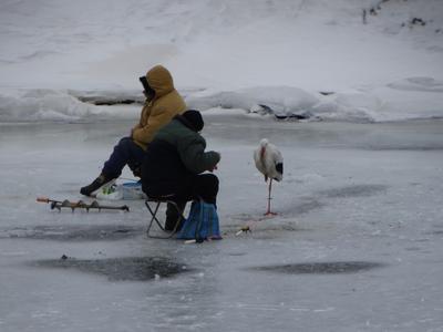 На рыбалке Рыбалка аист
