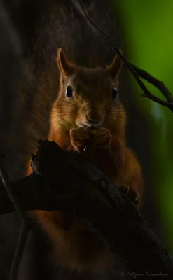 *** Белка лес природа животные