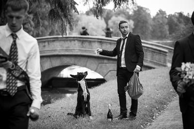 благодарный бутерброд собака, улица, парк, лето, мужчина, молодой человек, природа, животное, шампанское, пакет, мост, прогулка, бутерброд