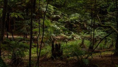 ***Девственный лес***