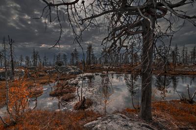 Воттоваара Карелия Воттоваара лес дерево камни озеро