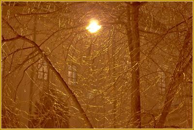 Золото обледеневших веток природа,зима,вечер,дерево,фонарь