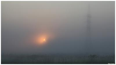 *** туман утро