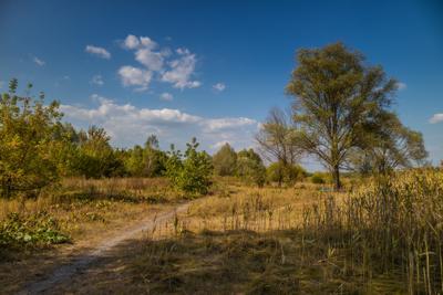 Луговая тропинка луг тропинка дерево сентябрь