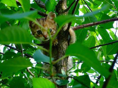 ***Юный Маугли котенок дерево листва прятки