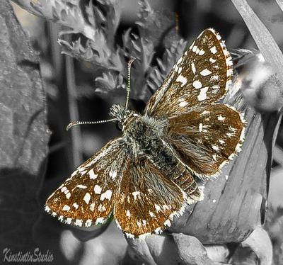 Весна..Бабочка.. весна бабочка май