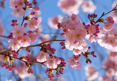 Розовое настроение розовые цветы весна облако радость март