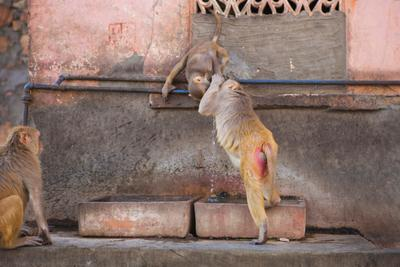 Thirst India Jaipur